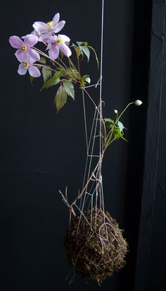 from string gardens. awesome.