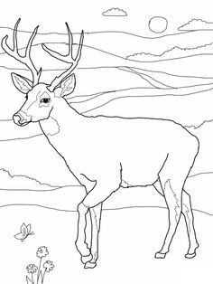 coloring pages of deer - Printable Kids Colouring Pages ...