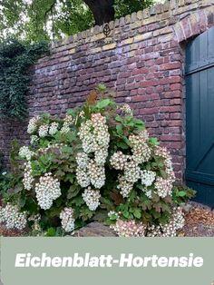 Kennst du alle Hortensien-Arten schon? Outdoor Structures, Plants, Climber Plants, Garten, Flora, Plant, Planting