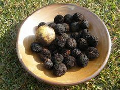 10 beneficii ale nucilor negre Blueberry, Health, Food, Plant, Berry, Health Care, Essen, Meals, Yemek