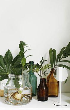 Vignette with plants & greenery | Studio Koti by SATO (styling: Susanna Vento) – Husligheter