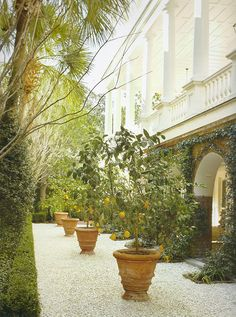 Potted lemon trees (Photo: G.P. Schafer Architect, The William Gatewood House)