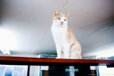 Amsterdam. cat shelter on the barge 21