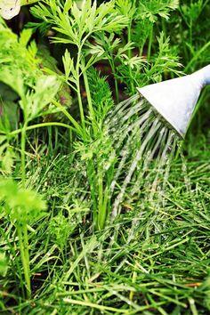 Ota ruohonleikkurista ruohosilppu talteen!   Viherpiha