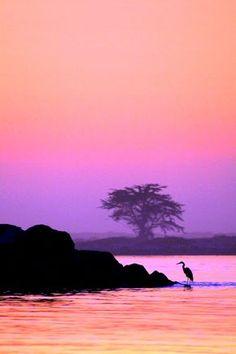 Naturaleza. paisajes. Colores. Composicion