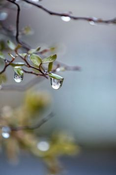 Beautiful Rain Wallpapers for Cool WhatsApp Status and Display Pictures Dew Drops, Rain Drops, Rain Wallpapers, Phone Wallpapers, I Love Rain, Rain Photography, White Photography, Morning Dew, Water Droplets