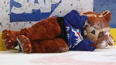 """Eishockey: Adler Mannheim feuern Maskottchen Hamster """"Udo"""" - Bild.de"""