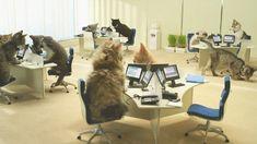 customer service cat - Google Search