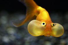 Funny Fish;D