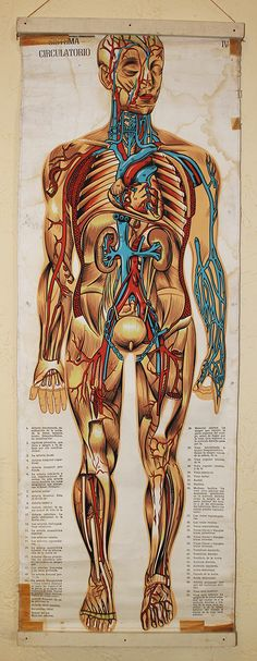 vintage medical chart Morbid Sensibility and Oddities Pinterest
