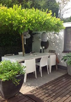 Create a living umbrella by planting wisteria