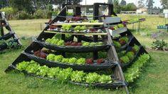 agricultura urbana - Pesquisa Google