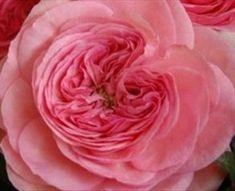 225 Besten Pink Flowers Bilder Auf Pinterest Pflanzen