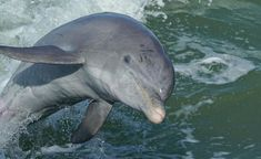 Marco Island Dolphin Tour   Best Marco Island Boat Tours Dolphin Tours, Marco Island, Boat Tours