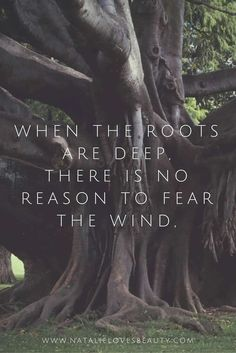 Have deep roots with no fear of the wind.