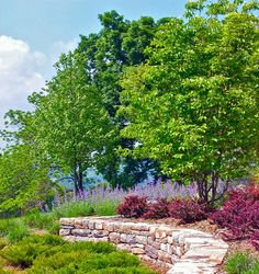 Traditional Landscape Shrubs Under Trees Design, Pictures, Remodel, Decor and Ideas - page 2
