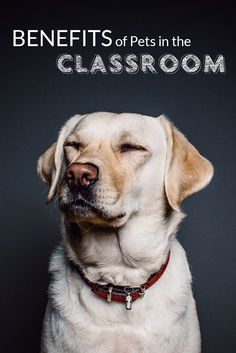 Benefits of #Pets in the Classroom - no doubt there are benefits to both the children and the pets!