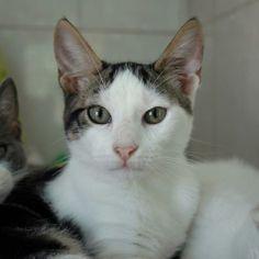 LENNY - Gato adoptado - AsoKa el grande