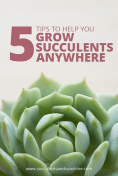 If you've struggled to grow succulents, this is the post for you! These aren't…