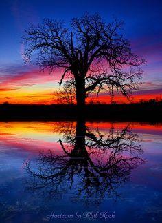 ✮ Tree of Life by Phil Koch Beautiful photo! Beautiful Sunset, Beautiful World, Beautiful Images, Simply Beautiful, All Nature, Amazing Nature, Amazing Photography, Nature Photography, Exposure Photography