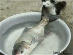 GİF HAREKETLİ RESİMLER % 100 ÜCRETSİZ PAYLAŞIM: cats fish :))