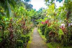 Pathways La Choza del Manglar Puerto Jimenez, Osa Peninsula Costa Rica #vacation #family #fun