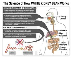 How White Kidney Bean Extract works