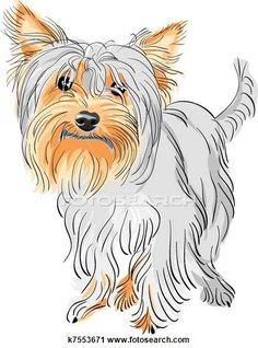 Clipart of vector pedigreed dog Yorkshire terrier