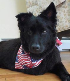 Happy 4th from Lucky! #Tripawds