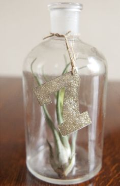 air plant table number