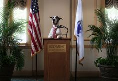 We are here today to remember Buddy, the first lady of the seeing eye.