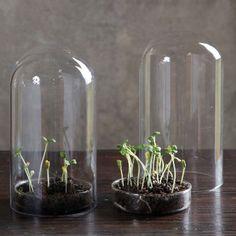Petrie Dish & Dome Terrarium