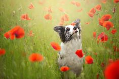 20 Year-Old Photographer Creates Dog Portraits Straight out of Your Dreams