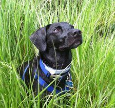 Blake water dog hunter