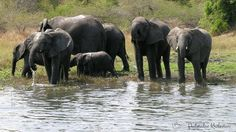Dopływ jeziora Malawi - rzeka w Afryce wpływająca do jednego z ulubionych Jezior Afrykańskich, na bazie którego wzorują się akwaryści tworząc biotop jeziora Malawi.