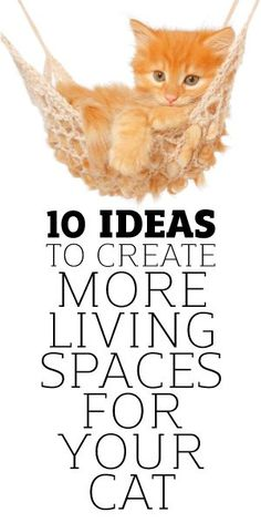 10 Ideas To Help You Create More Space For Your Cat