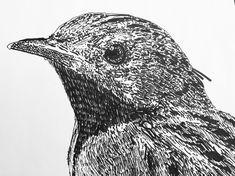 Detail Heggenmus 2017 Owl, Fine Art, Bird, Detail, Illustration, Animals, Animaux, Owls, Birds