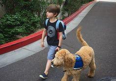Diabetic Service Dogs, Diabetic Dog, Dog Separation Anxiety, Dog Anxiety, Anxiety Facts, Anxiety Tips, Social Anxiety, Service Dog Training, Training Your Dog