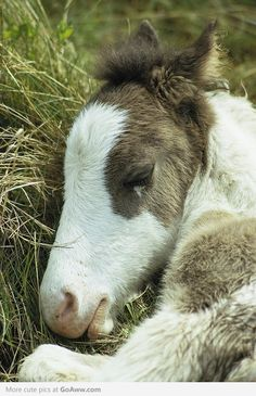 Precious. I would really love to experience a new foal again