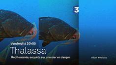 Thalassa : tout sur l'émission, news et vidéos en replay - France 3