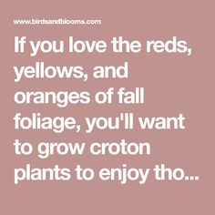 If you love the reds, yellows, and oranges of fall foliage, you'll want to grow croton plants to enjoy those vivid hues all year long.