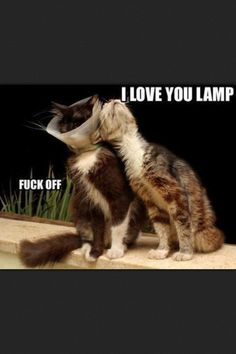 30 Animal pictures with captions, animal captions, animal memes Animal Captions, Funny Captions, Funny Animal Memes, Funny Animal Pictures, Cat Memes, Animal Humor, Funny Memes, Meme Pictures, Clean Animal Memes