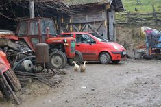 Village Ljutice in Serbia, ducks and other domestic animals always in the yard