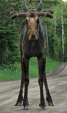 Roadblock on the Gunflint Trail in Cook Country, Minnesota • photo: Crystal Clemons on Bearskin Lodge via Facebook