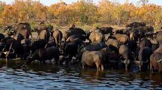 Twitter National Geographic Wild, African Safari, Elephant, Live, Twitter, Animals, Animales, Animaux, Elephants