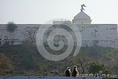 Photo about Two grey langur monkey sit on a roof top railing surveying the scene at Shri Nathji Temple on Govardhan hill in North India. Image of footed, calmness, hair - 69520322 North India, Roof Top, Monkeys, Temple, Scene, Stock Photos, Grey, Outdoor, Image