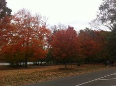Autumn in Prospect Park. Prospect Park, Peaceful Places, You Are My Sunshine, Country Roads, Autumn, York, Nature, Naturaleza, Fall Season