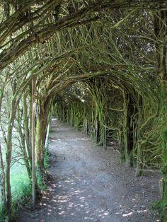 Yew Tunnel  Trevarno Garden  Cornwall