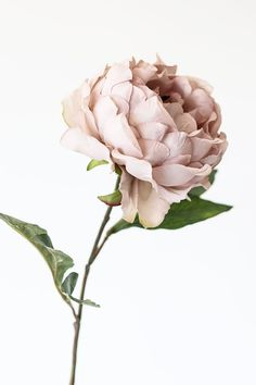 Create a stunning artificial flower arrangement with beige peony flowers that look like the real deal! Shop silk flowers at Afloral.com. Artificial Peonies, Artificial Flower Arrangements, Wedding Flower Arrangements, Wedding Centerpieces, Floral Arrangements, Fall Wedding Bouquets, Diy Wedding Flowers, Flower Bouquet Wedding, Flower Bouquets