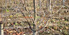 Fenofaza după căderea frunzelor la măr Paradis, Mai, Plants, Gardens, Green, Outdoor Gardens, Plant, Garden, House Gardens